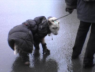 Dog Coat M